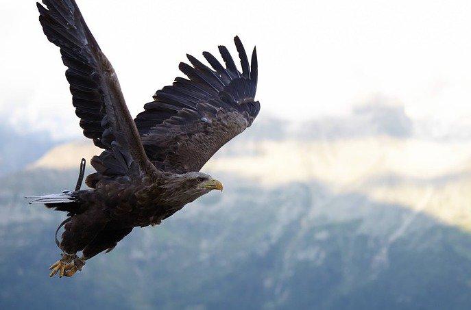 Google Update Hawk: Wat kunnen we verwachten?
